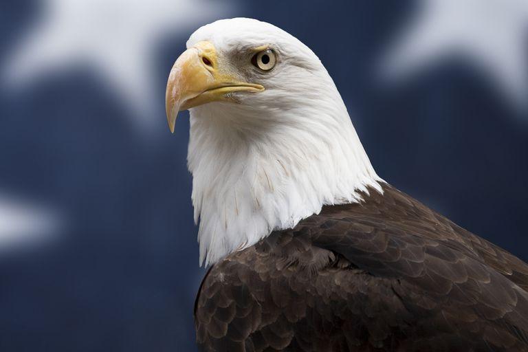 Exploring Symbolism in the Bald Eagle